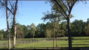 Delta Ventures Pasture