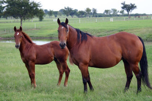 Mare-and-Foal-Near-Water