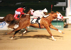 T M Ranch's, Ol Time Preacher Man wins the $60,000 Treme Stakes Saturday, August 16, 2014 at the Fair Grounds Race Course & Slots in New Orleans , LA. Trained by Kenny Roberts, Sr and ridden by jockey Patrick Watson, the 3 Year-old Louisiana bred gelding ran the 350 yards in 17.435 seconds. Photo by Hodges Photography / Lynn Roberts