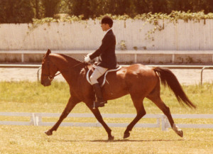 Zam Zam trying to do 3rd Level dressage