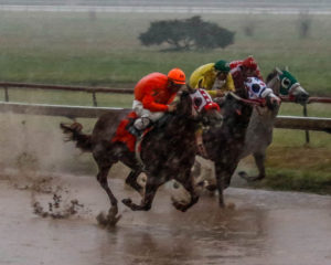 Switalski rain