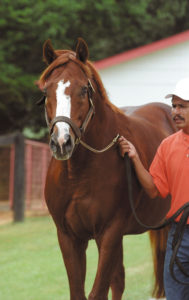 Ide at Clear Creek Stud. © 2003 Barbara D. Livingston. All rights reserved. easygoer78@aol.com Credit line required.